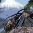 Bbc Hayat - Böcekler Resimleri
